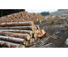 Angajam taietori de lemne- ultimele locuri