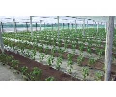 Angajam muncitori in agricultura